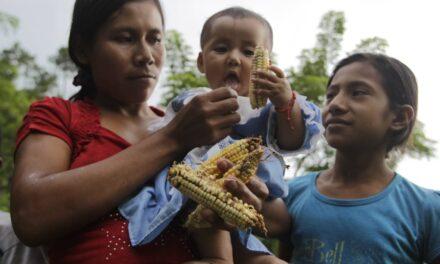 Un panorama absolutamente desalentador para la primera infancia en Guatemala