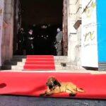 El chucho en la alfombra roja