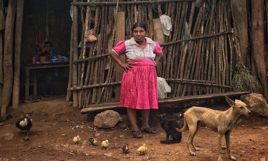 """Kamala Harris: """"Apoyo a la MIPYME para generar empleos"""""""